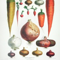 "Botanical resource Album Vilmorin ""Vegetable Garden"""